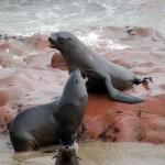 Zwei Robben