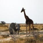 Elefant und Giraffe