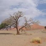 Baum neben Düne 45